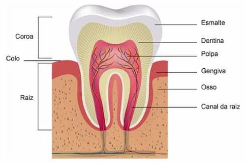 coroa de dente sr implante